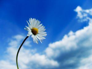 291845 daisy age