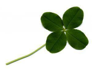 847654 four leaf clover