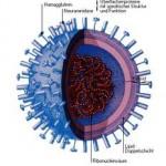 viren_influenzavirus_1835691propertyinline