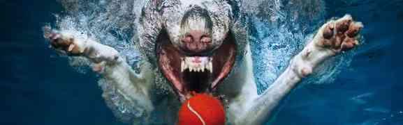 Unterwasserhunde