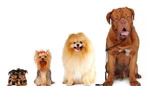 Von Hunden und ihren Haltern