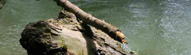 Von Ufer und Wasser