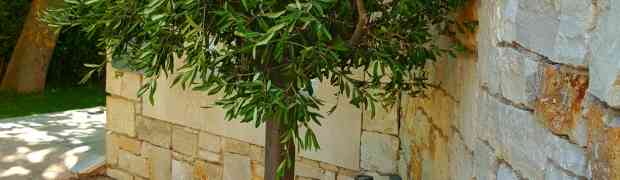 Von Ferien in Kreta und Hapimag