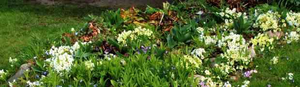Ein Versuch den Frühling zu finden